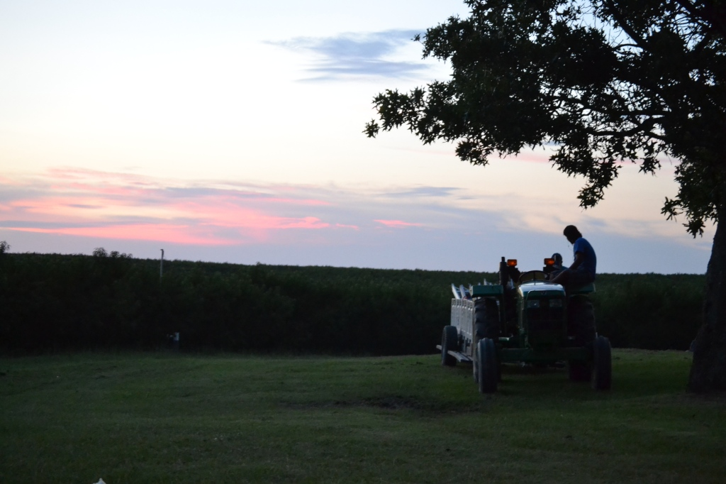 A farmworker relaxing on his tractor at sunset